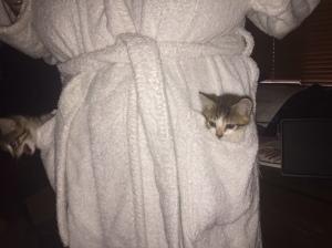 Kitties in pocket.